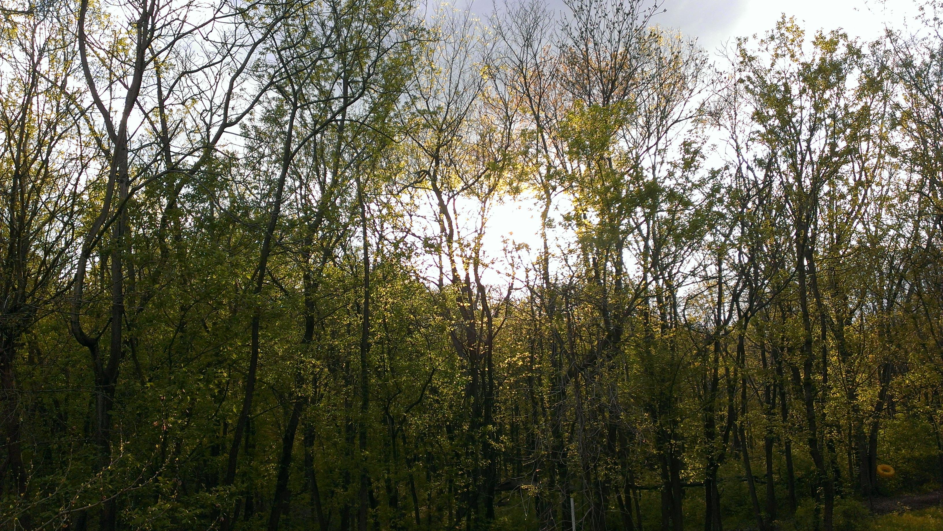 Ms. Lee's woods